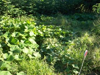 Garden Abundance