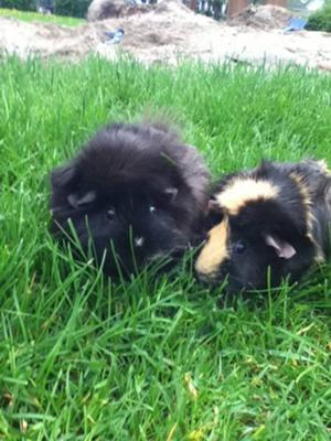 Our Two Loveable Piggies