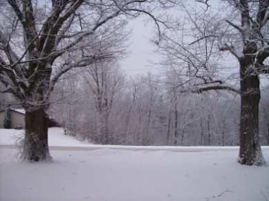 Two trees on a snowy winter day