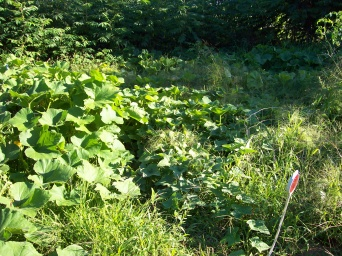 Garden Poems & Quotes