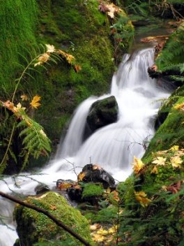Waterfall with moss covered rocks on either side