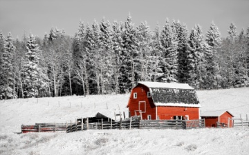 Red Barn In Winter with snow covered trees