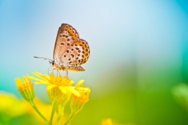 Butterfly on flower, both yellow